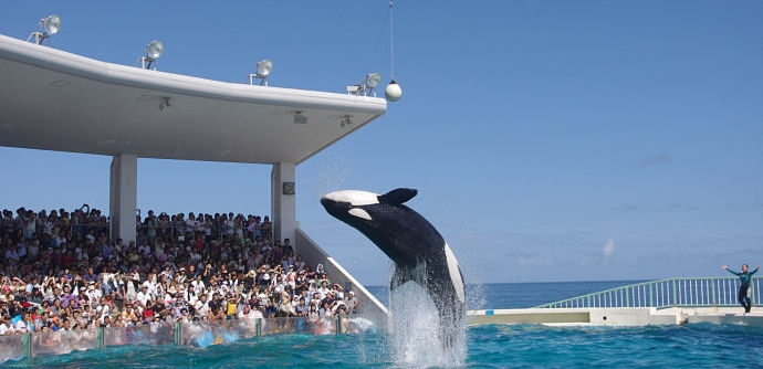 Empty The Tanks: A Movement To End Marine Mammal Captivity
