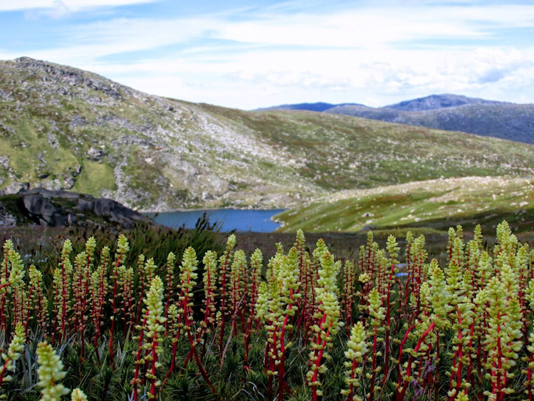 Kosciusko National Park is worth fighting for
